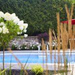 Plantes vues de près avec piscine en arrière-plan