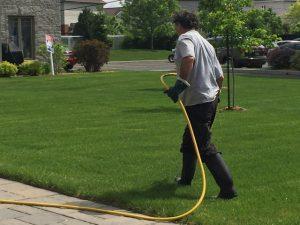 Homme traitant une pelouse