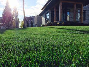 Belle pelouse vue de près