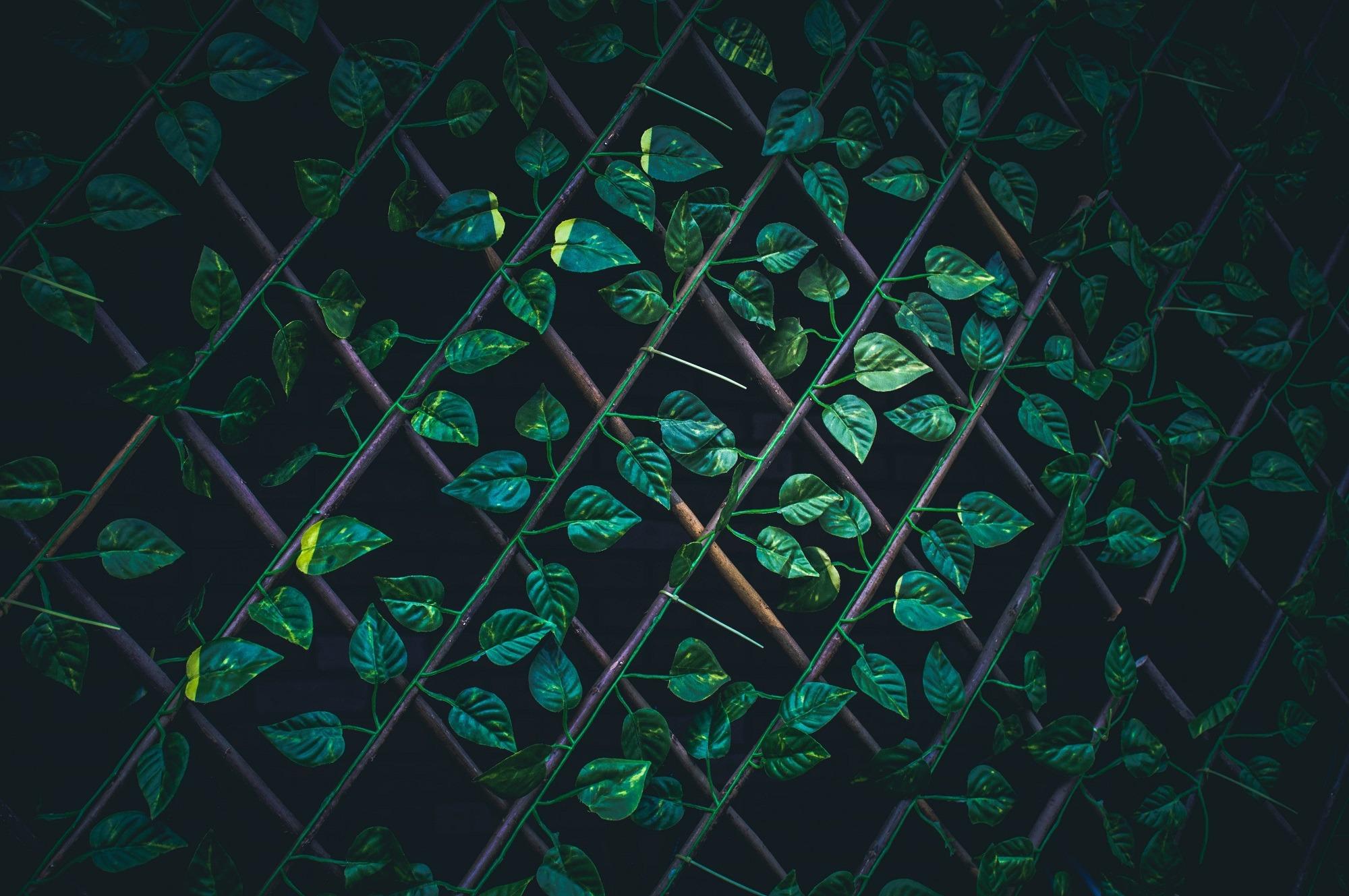 Treillis de métal avec feuilles.