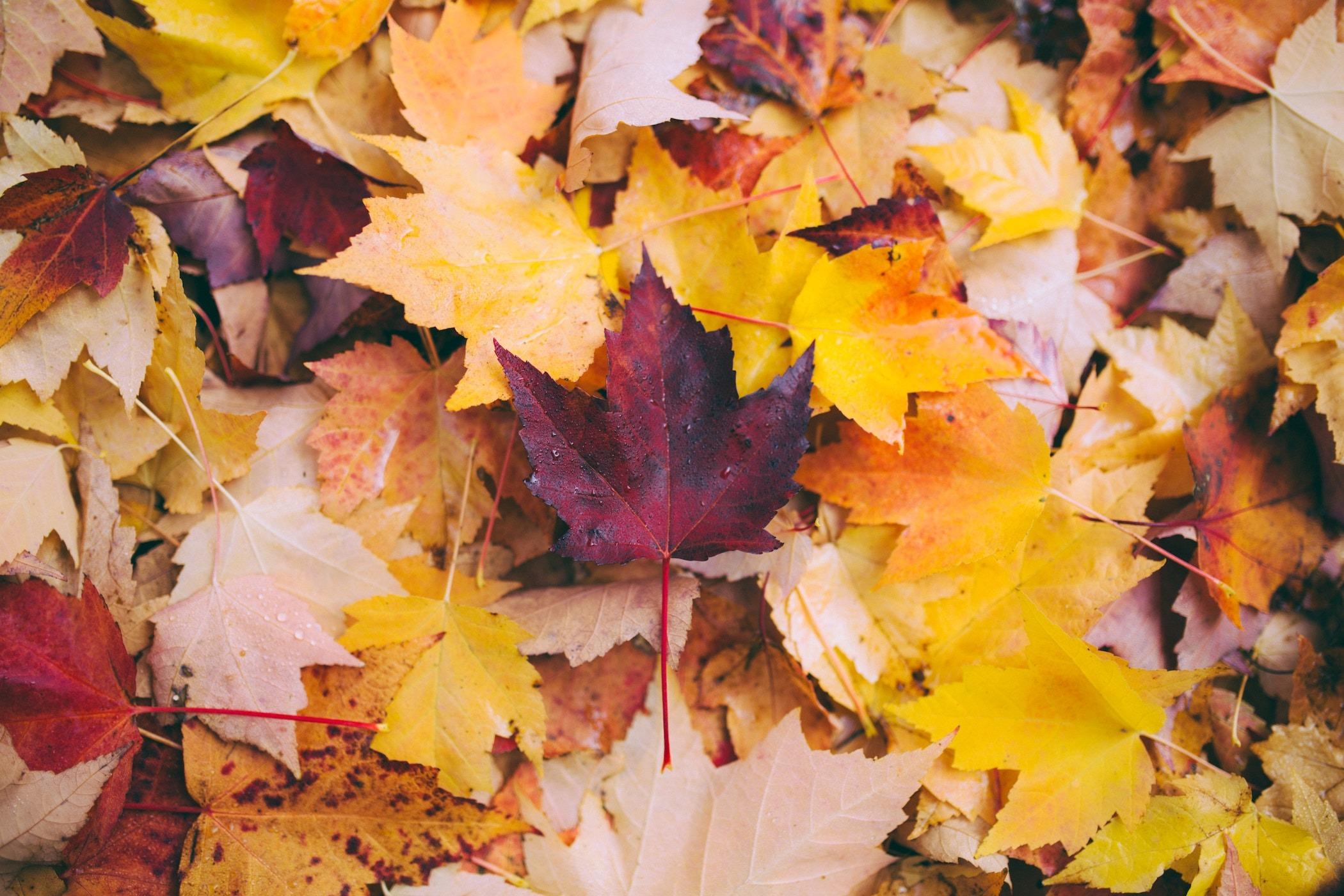 Faut Il Couper Les Lys Après Floraison comment fermer son terrain ? 10 erreurs les plus fréquentes