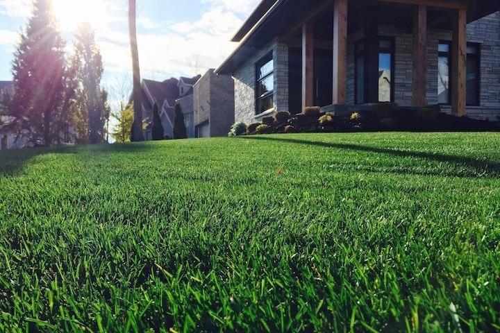 Traitement de la pelouse