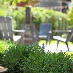 Plantes ornementales extérieures dans un aménagement