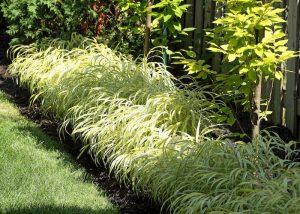 Plates bandes aménagées avec plantes vertes