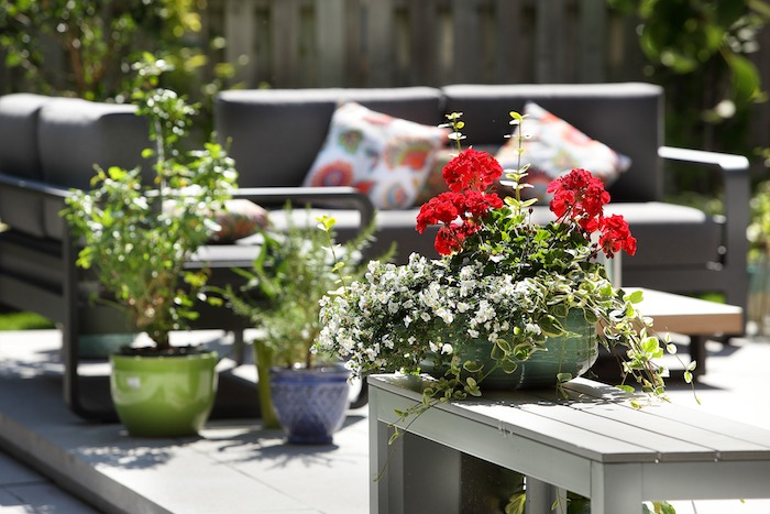 Fleurs en pot dans un aménagement extérieur