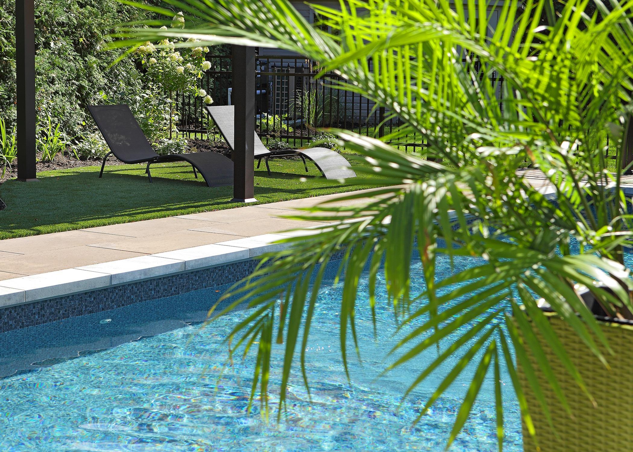 Aménagement paysager avec piscine, chaises longues et plante verte