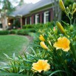 Fleurs jaunes dans un aménagement devant une maison