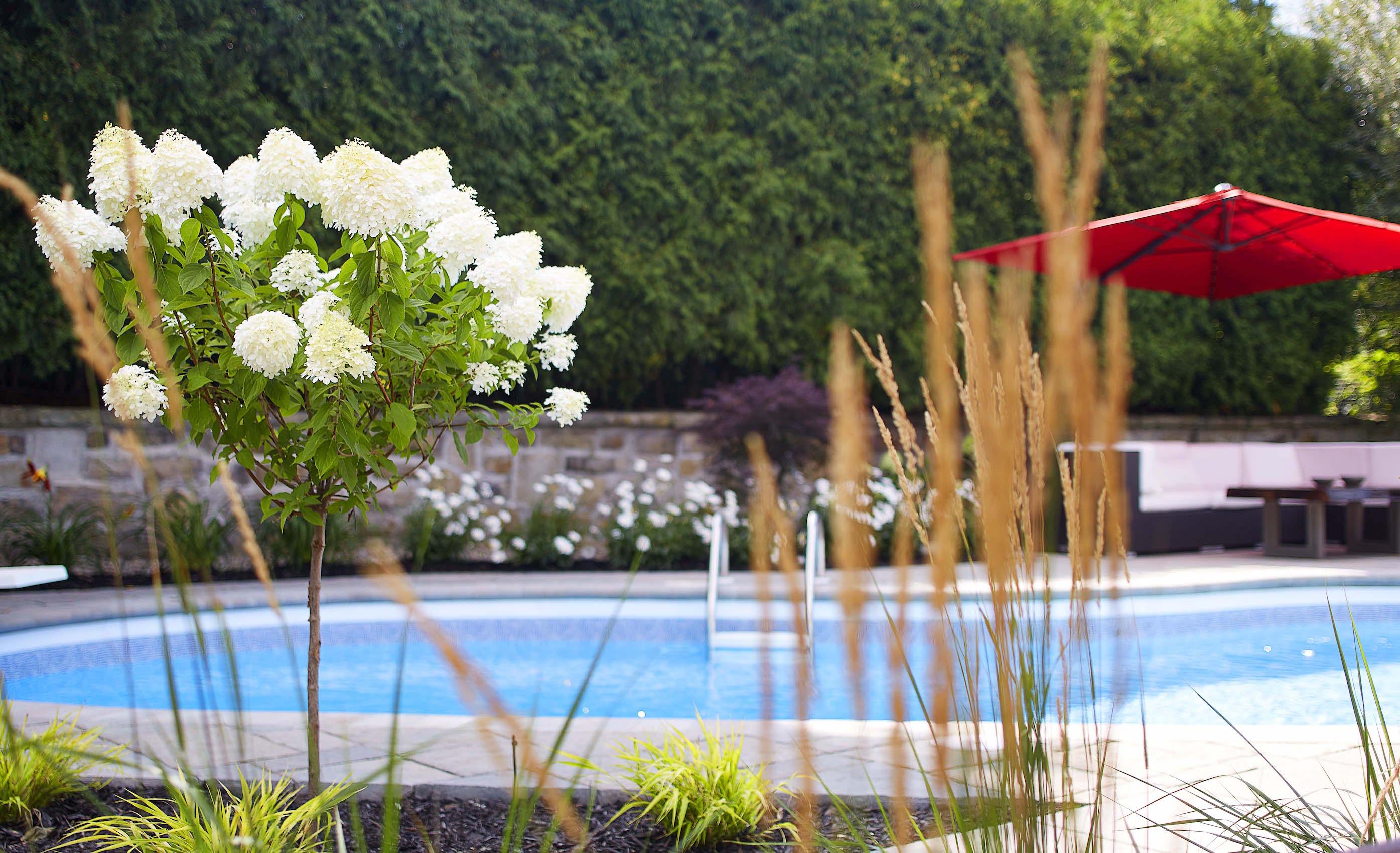 Aménagement extérieur comprenant une piscine et une zone repos, avec fleurs aménagées