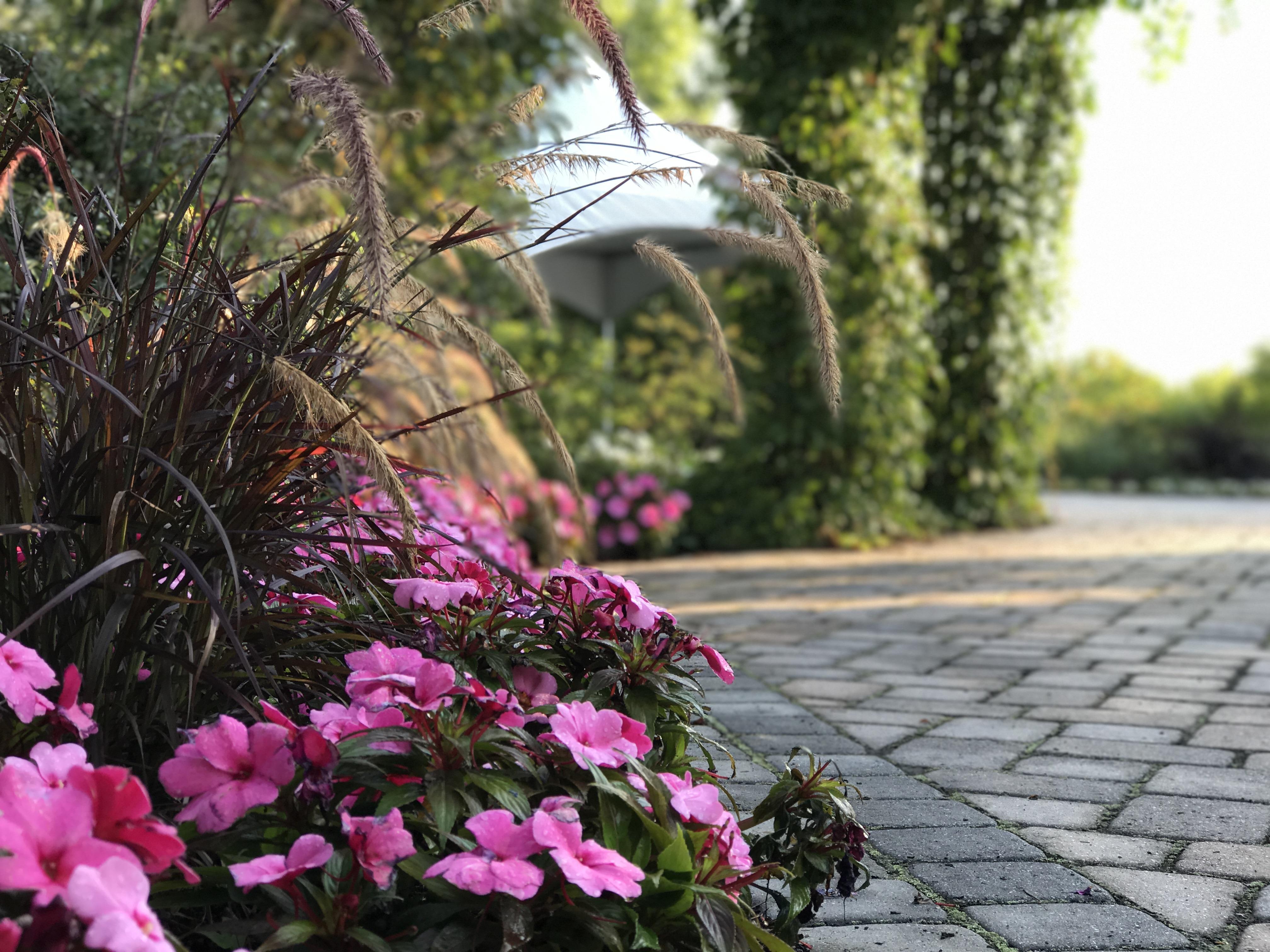 Fleurs roses dans un aménagement de cour arrière