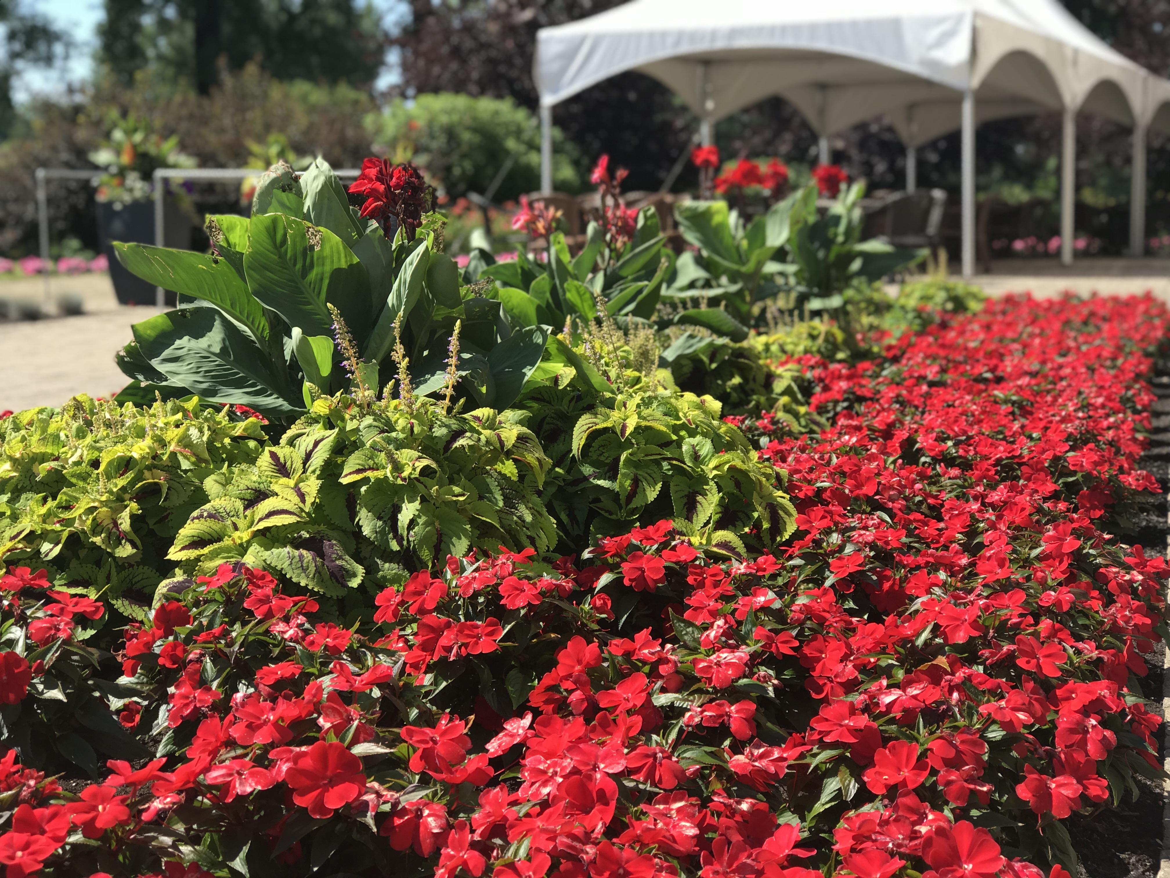 Fleurs rouges aménagées