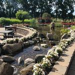 Aménagement d'un bassin entouré de pavés et de plantes fleuries