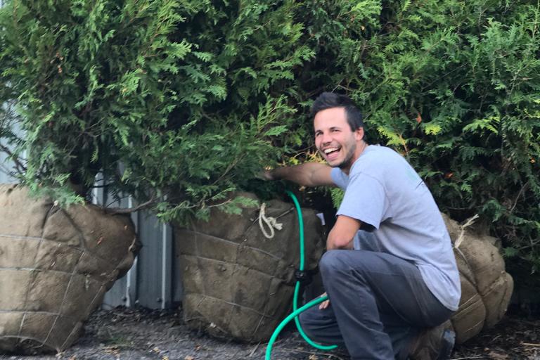 Horticulteur qui arrose des conifères
