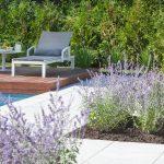 Aménagement paysager avec îlots de sauge au bord d'une piscine